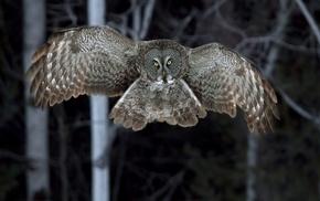 animals, night, forest, owl, birds