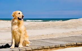 Собака, море, животные, пляж