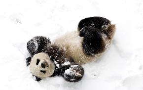 bear, snow, animals, winter