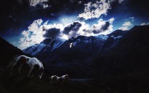 evening, stars, animals, horse, clouds
