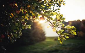 Sun, highlights, nature, evening, foliage