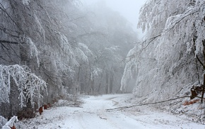 snow, road, forest, winter