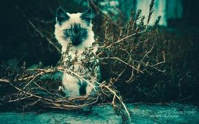 cat, animals, twigs