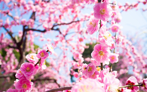 tree, bloom, nature, twigs, flowers