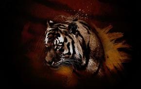 креатив, фон, Тигр