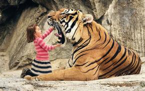 красивые, пасть, тигр, риск, шутка, опастность