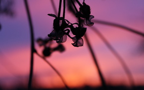 sunset, macro, plant, beautiful