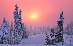 туман, закат, Зима, лес, солнце