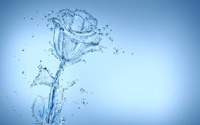 rose, water, beautiful, stunner, flower