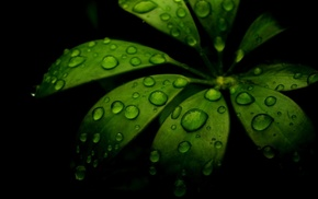 nature, green, black, water, dew