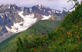 mountain, flowers, nature, grass, snow