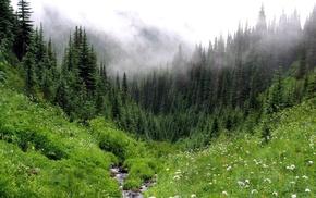 forest, mist, nature, glade