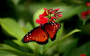flowers, background, butterfly, nature