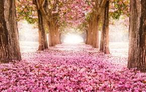 nature, trees, road, flowers, sakura