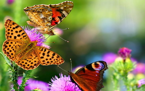 butterfly, nature, mood, background, flowers