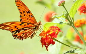 flowers, butterfly, tenderness, nature, background