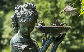 animals, water, birds, background, statue