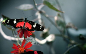 background, flowers, nature, butterfly, red