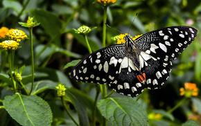 butterfly, macro, flowers