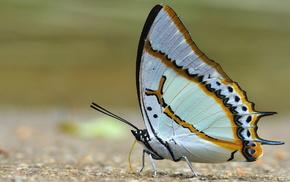 butterfly, Sun, nature
