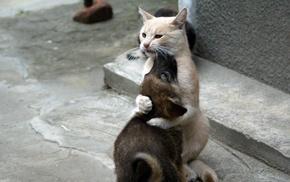 animals, cat, hugging, dog