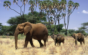 animals, elephants