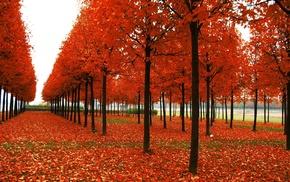 leaves, sky, nature, orange, autumn
