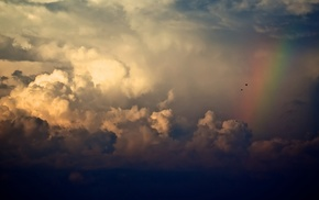 birds, rain, clouds, sky, stunner