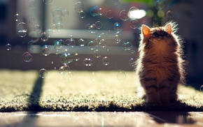 Ben Torode, carpets, sunlight, cat, looking up, bubbles