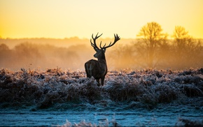 sunlight, deer, landscape, nature, morning, frost