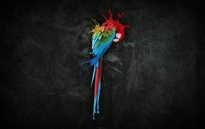 macaws, birds, liquid, parrot