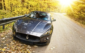 leaves, Sun, road, sportcar, cars