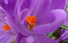 flowers, spring, flower
