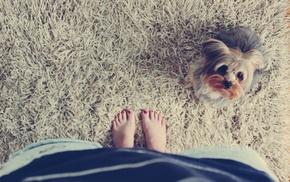 animals, barefoot, feet, dog, grass