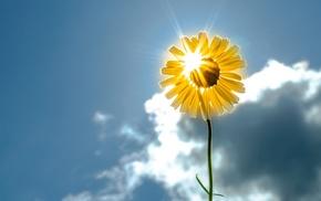 yellow, macro, Sun, clouds, flower