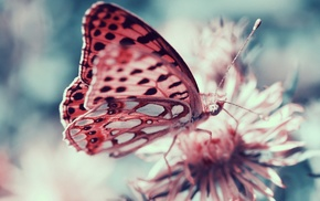 butterfly, macro, insect, moths