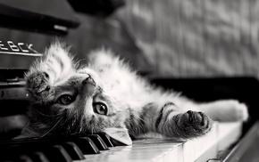 animals, piano, cat, kittens, upside down, monochrome