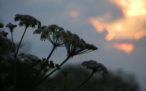 macro, dawn, Sun, clouds, sky