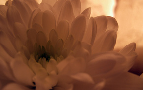 Sun, beautiful, flowers, flower, sunset