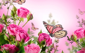 tulips, flowers, pink, background, roses