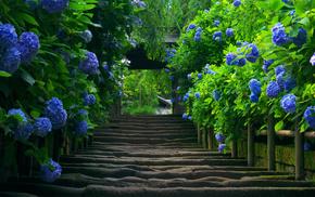 flowers, foliage, greenery, stairs, stunner