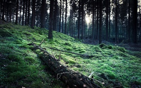 forest, moss, nature, trees, HDR