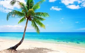 nature, sea, palm, sky, tropics