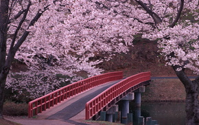 river, sakura, water, bridge, flowers