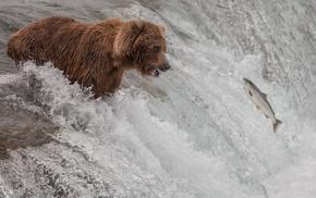 water, bear, waterfall, nature, animals