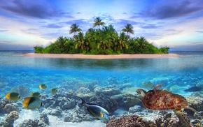 jungle, island, photoshop, ocean, fish