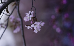 depth of field, twigs, white flowers, flowers, nature