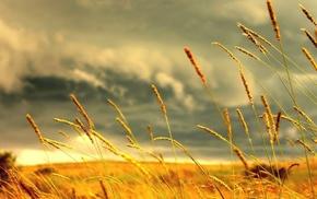 landscape, spikelets