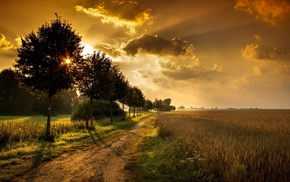 clouds, sunlight, sky, path, orange, field