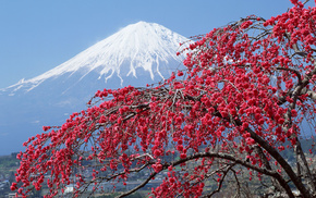 Japan, tree, city, river, flowers